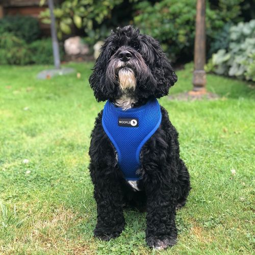 Woofles Dual Airmesh Dog Harness-blue