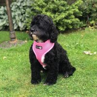 Woofles Dual Airmesh Dog Harness-Pink