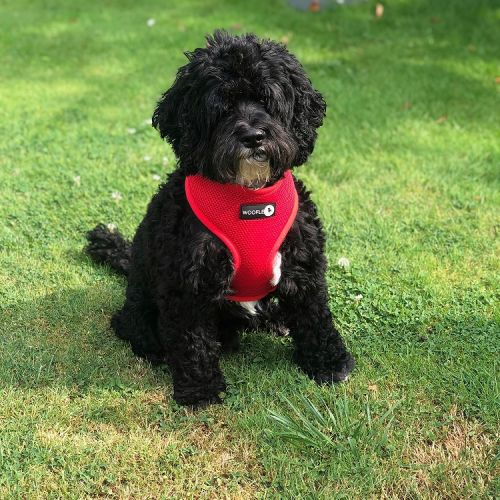 Woofles Dual AirMesh Dog Harness - Red